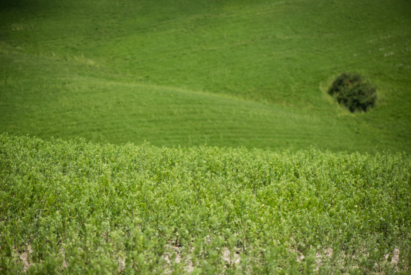 (Un)common landscapes: Val d'Orcia